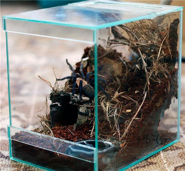 Содержание пауков в домашних условиях – thepretty.ru