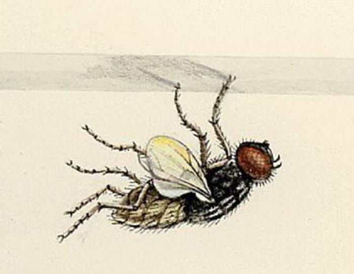 """Почему муха ходит по потолку проект. исследовательская работа на тему """" почему муха не падает с потолка"""". ученые разобрались, почему муха не падает с потолка"""