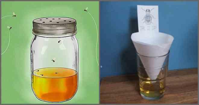 Ловушка для мух: из пластиковой бутылки, электрическая, австралийская, липкая