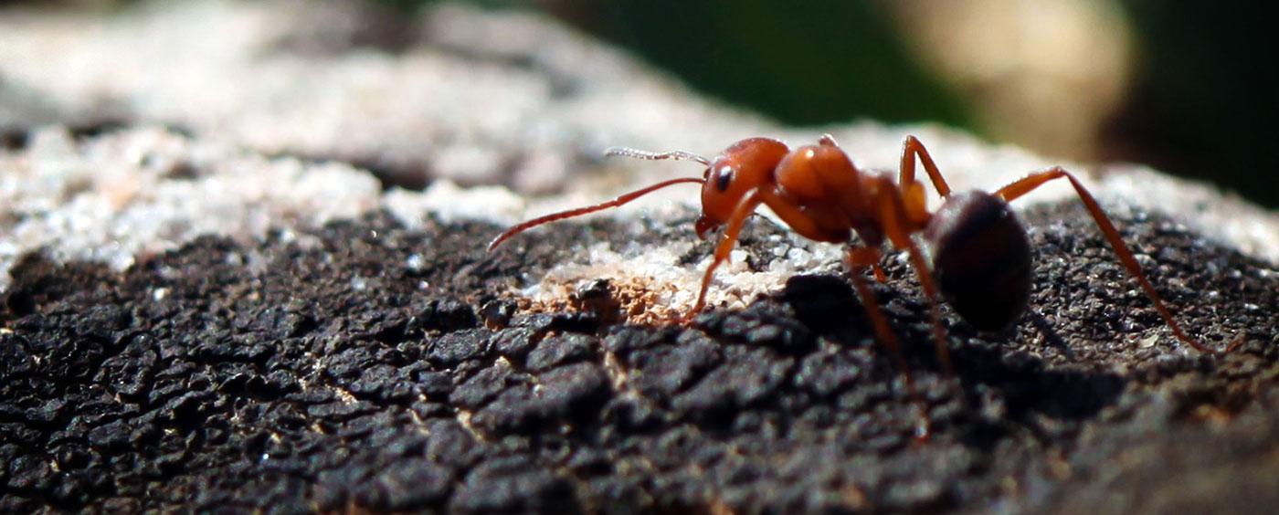 Как устроен муравейник – интересная жизнь муравьиного сообщества