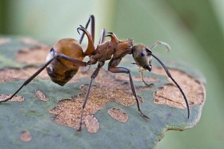 Из названных насекомых конечности роющего типа имеет – сколько ног у зверей?