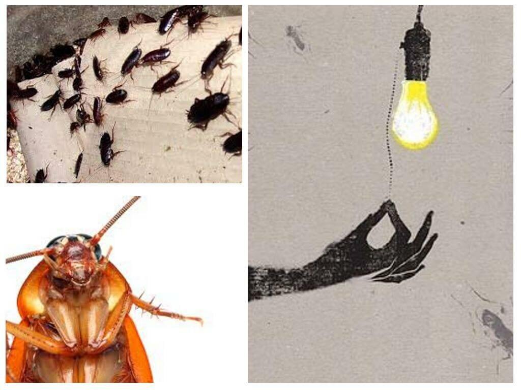 Чего боятся тараканы в квартире больше всего: какого запаха и чего еще?