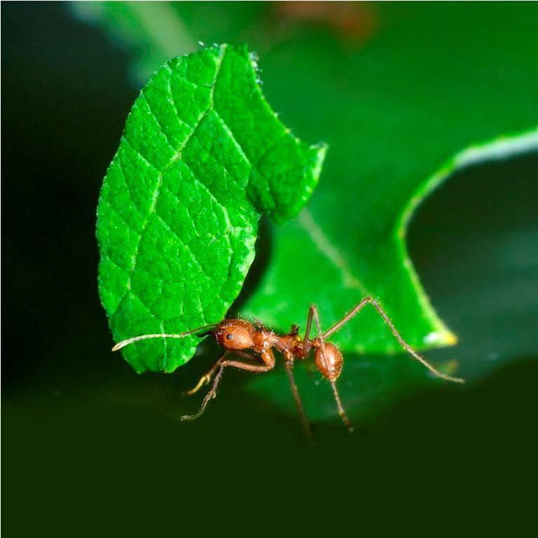 Борьба с муравьями в саду   клуб любителей муравьев