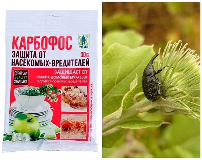 Долгоносик: как избавиться в огороде на клубнике, в квартире, народные средства