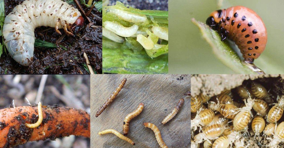 Как бороться с гусеницами на деревьях: химические и народные средства