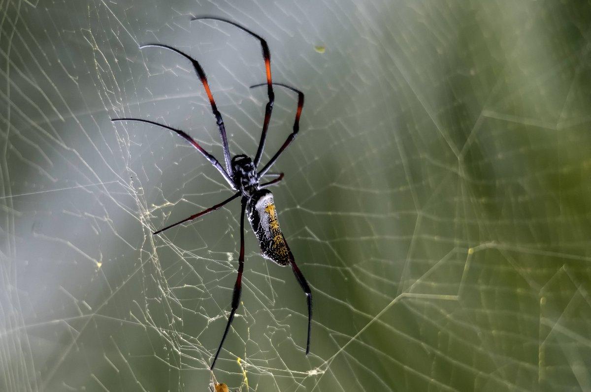 Чем питаются пауки в квартире