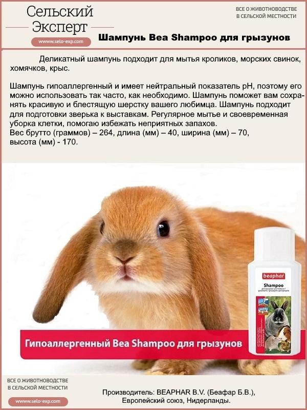 Блохи у кролика: декоративного и обычно, что делать и чем лечить?
