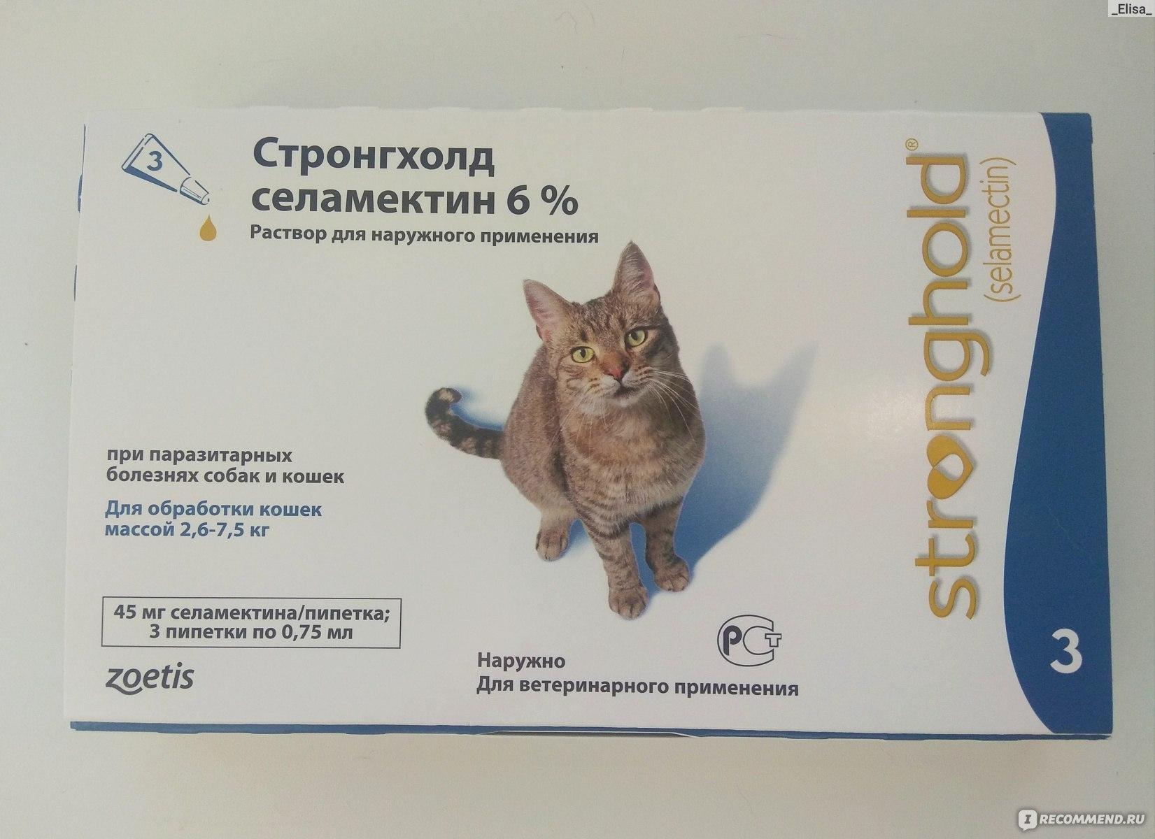 Как вывести блох у кошки в домашних условиях, народными средствами, как вывести из кквартиры