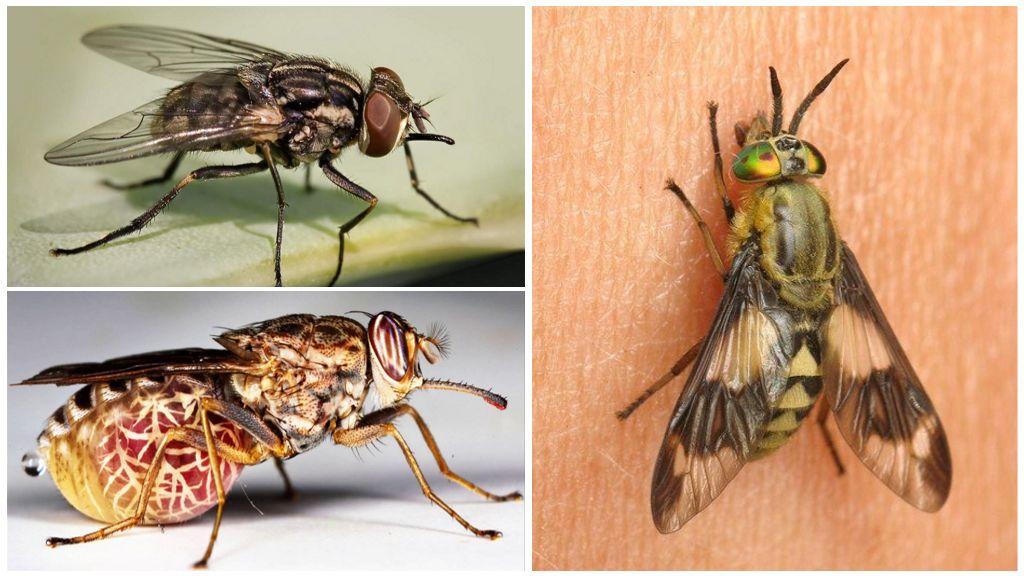 Сколько живет муха в квартире