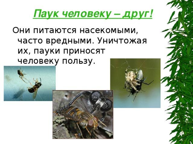 Роль пауков в природе: чем полезны для людей, какую роль играют?