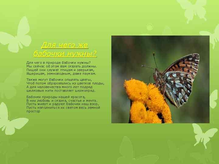 Бабочки по фен-шуй - виды талисмана, расположение в доме, запреты