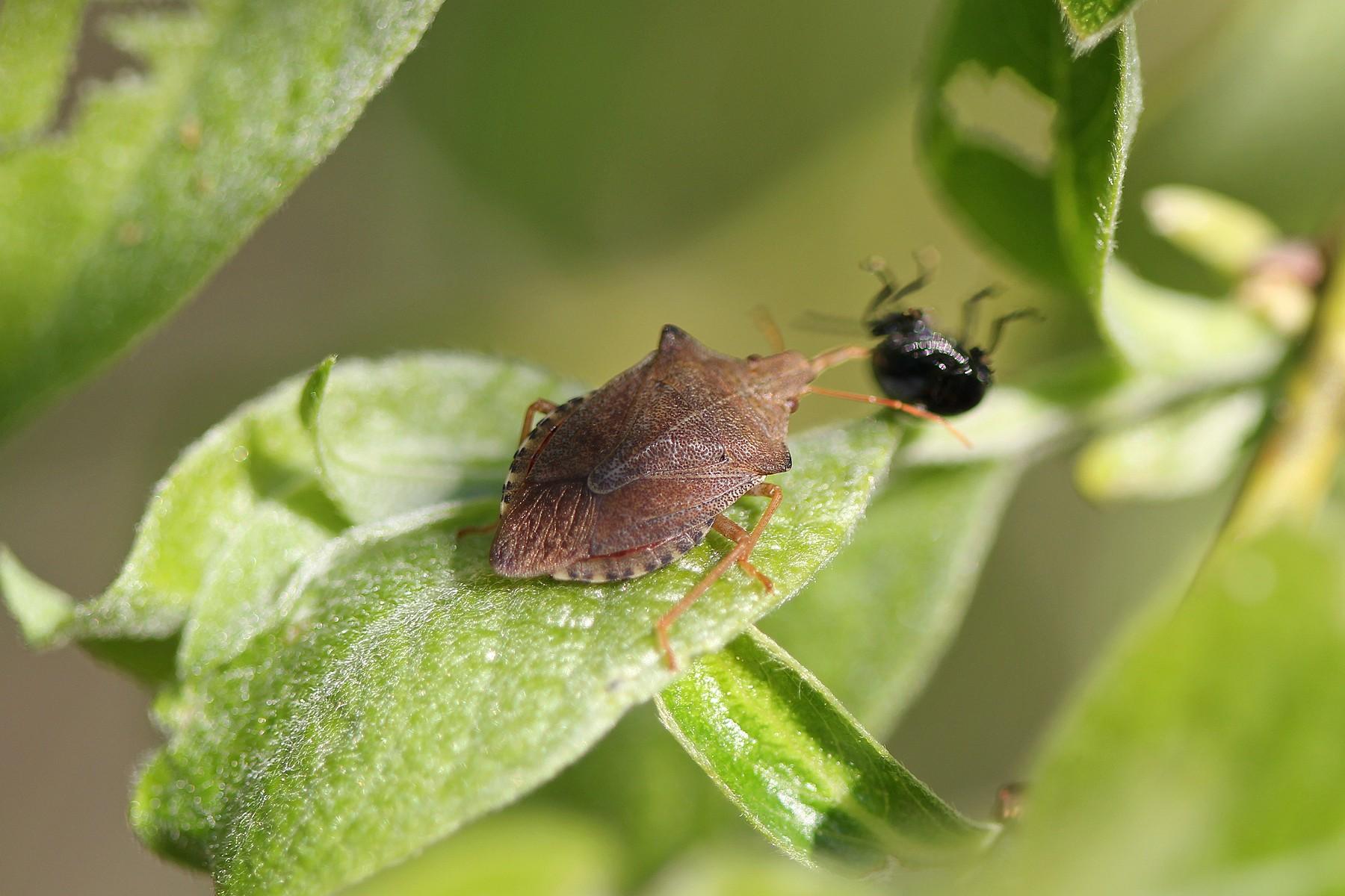 Как защитить редис от вредителей? фото и описание насекомых, рекомендации по борьбе с ними, отличия от болезней