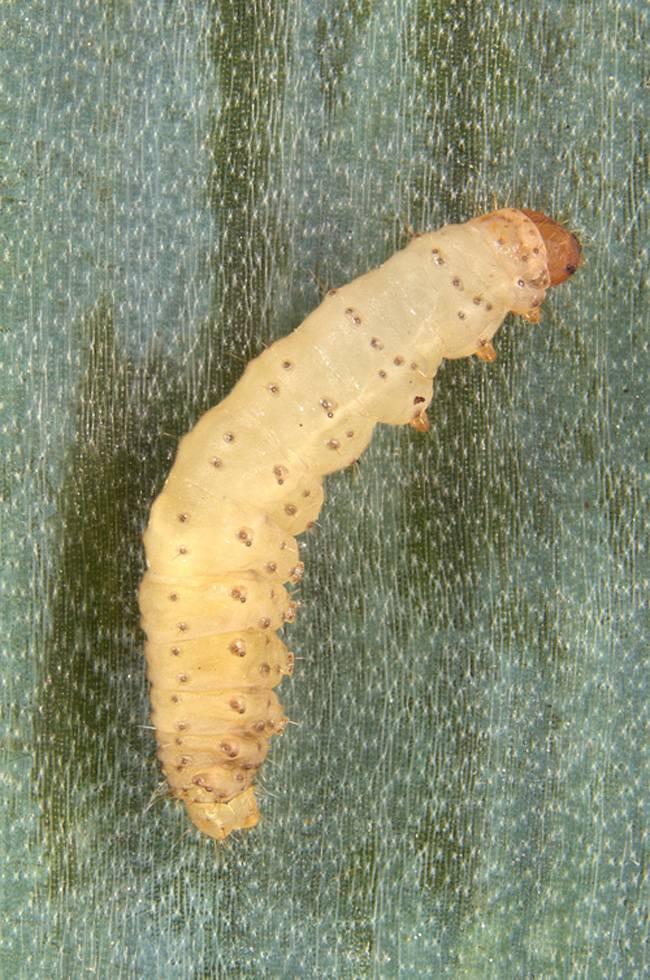 10 способов, как избавиться от луковой моли