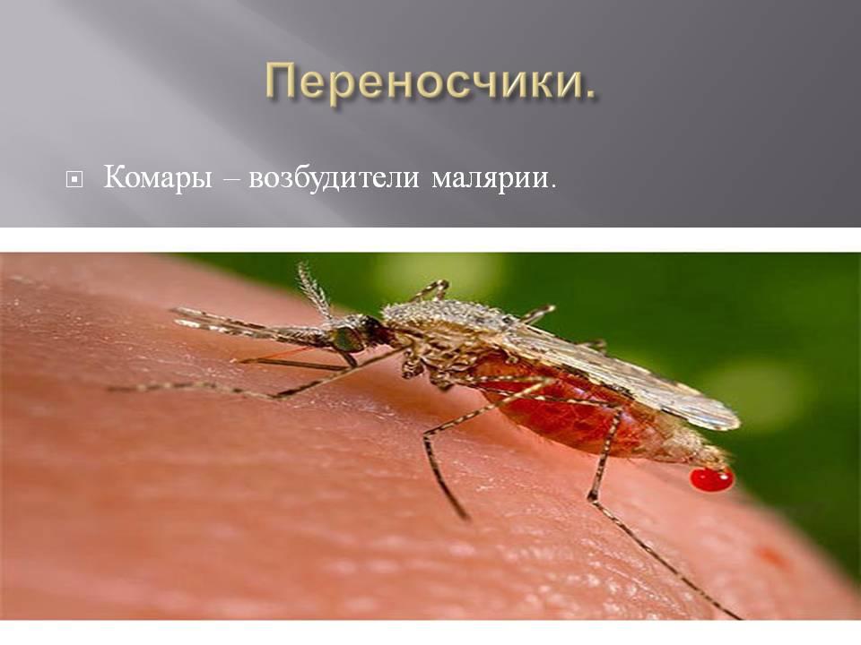 Малярийные комары: фото, как выглядит место укуса, чем они опасны, отличительные характеристики, способы защиты от них
