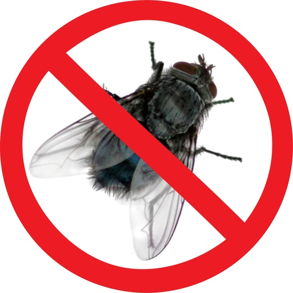 Почему кусаются мухи и можно ли защитить от них своего питомца! описание и фото укусов мух.