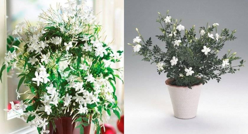 Как избавиться от тли на растениях в квартире и саду в домашних условиях? советы с фото на ydoo.info