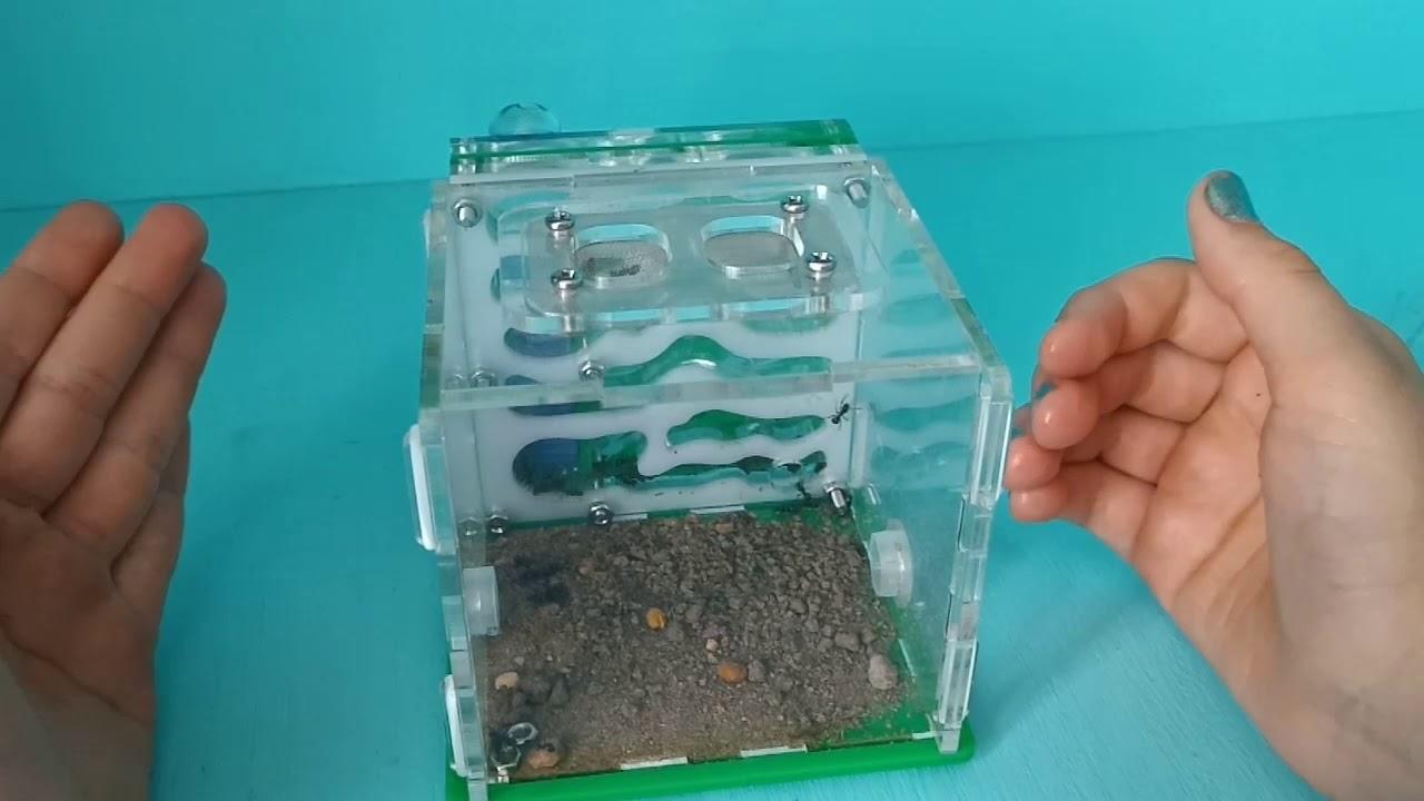 Как построить муравьиную ферму
