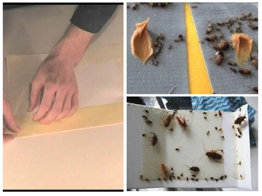 Клей от тараканов (липкая лента) - можно ли использовать скотч и как?