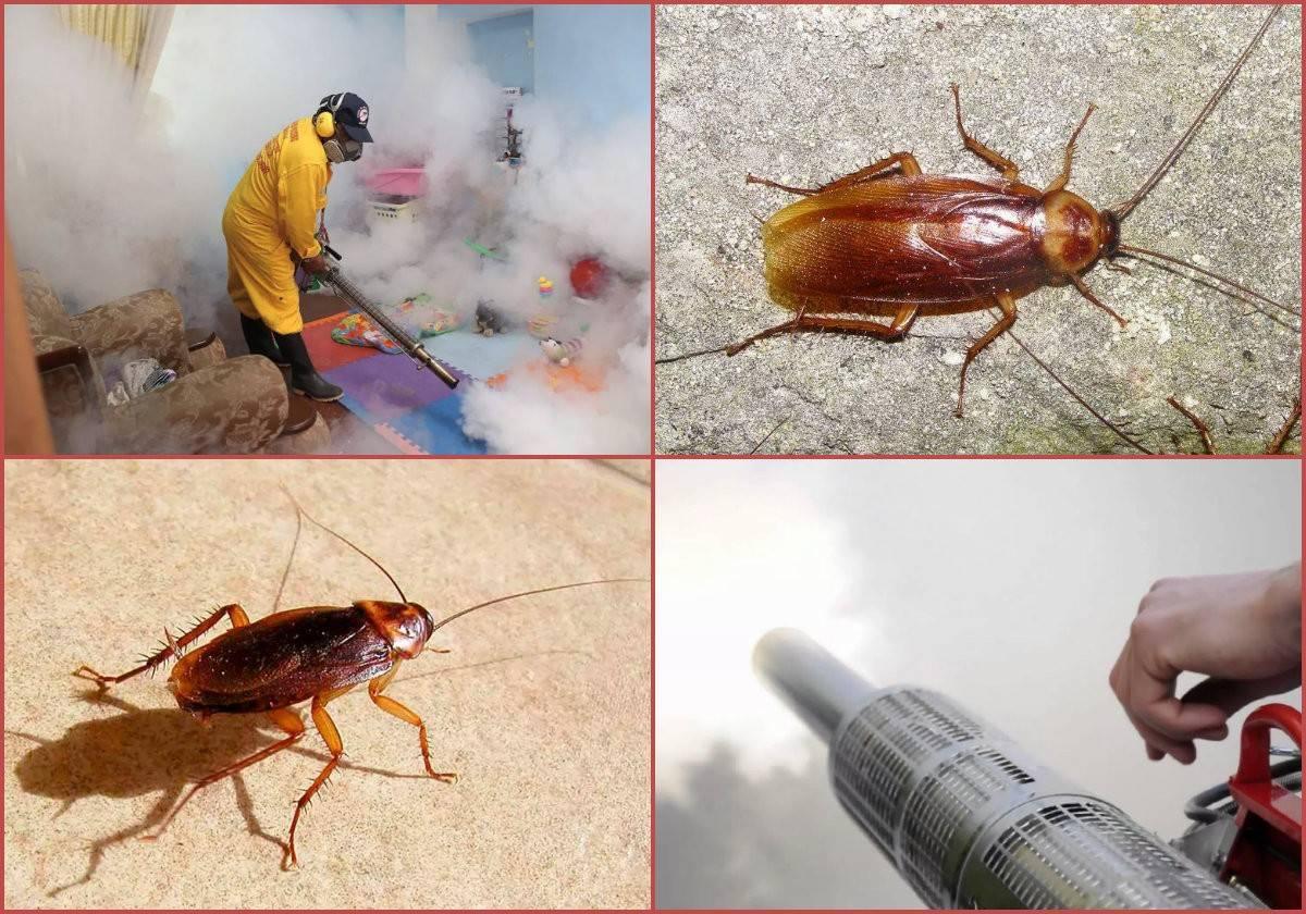 Инструкция как избавиться от тараканов в общежитии: средства, способы и советы
