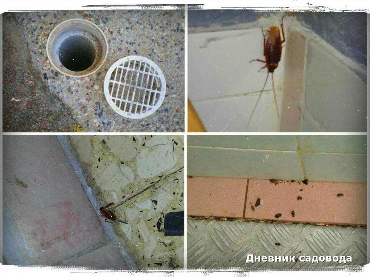 Как избавиться от тараканов в общежитии: чем травить, есть ли смысл бороться?