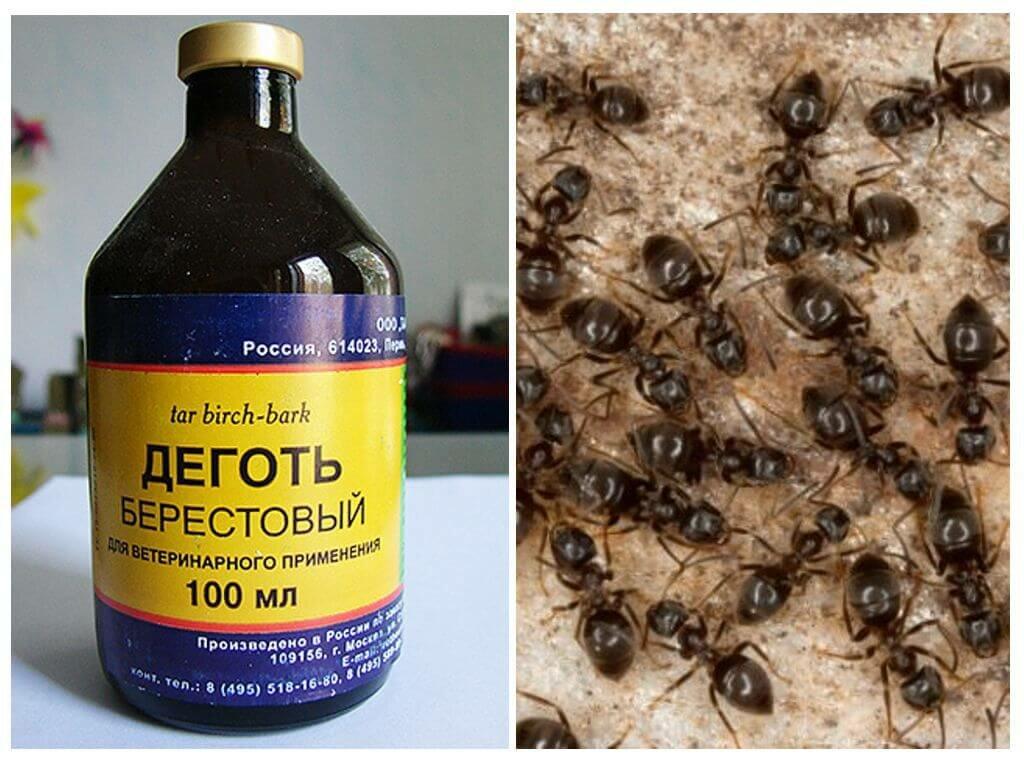 Деготь от муравьев и тли на огороде и деревьях