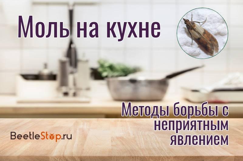 Пищевая моль - как избавиться на кухне, средство от вредителя