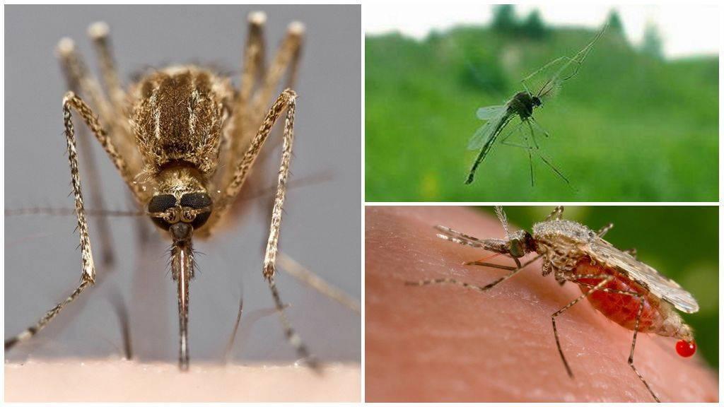 Когда появляются комары и пропадают