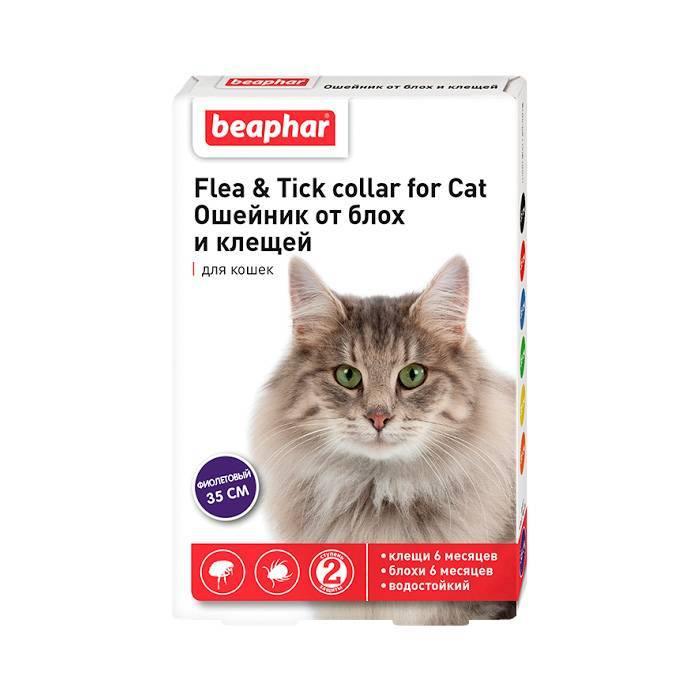 Ошейники от блох для кошек: как действуют, как выбрать, обзор лучших