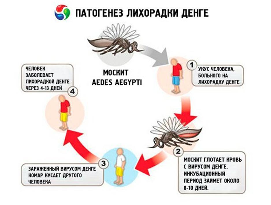 Может ли комар заразить гепатитом с | s-voi.ru