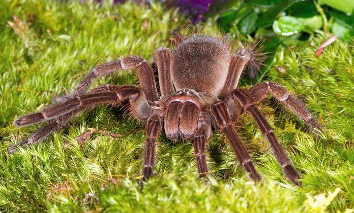 Самый большой паук в мире - топ 10 с фото и видео