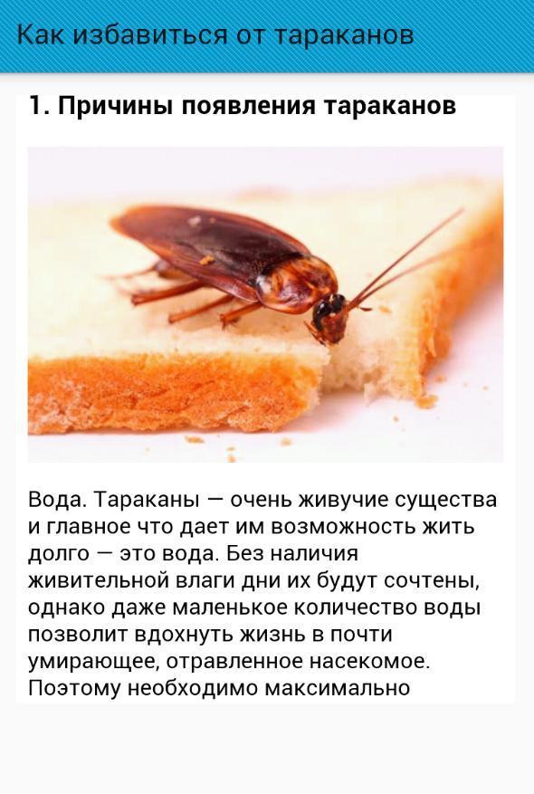Появление тараканов. откуда берутся тараканы и почему они выбрали именно ваше жилище? нашатырный спирт – враг насекомых.