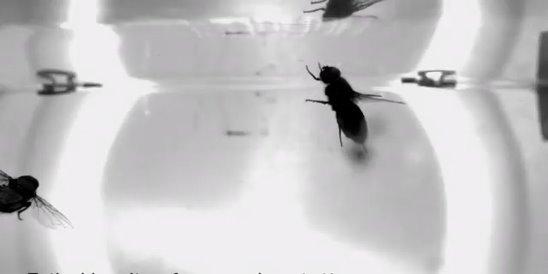 Как муха садится и держится на потолок, почему не падает
