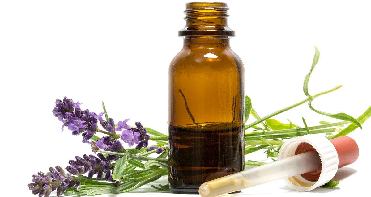 Эфирные масла от блох в квартире: лаванда, эвкалипт, чайное дерево, пихтовое масло