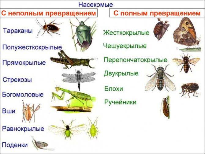 Как выглядит гусеница и бабочка моли? где живет и чем питается в квартире, разновидности и образ жизни