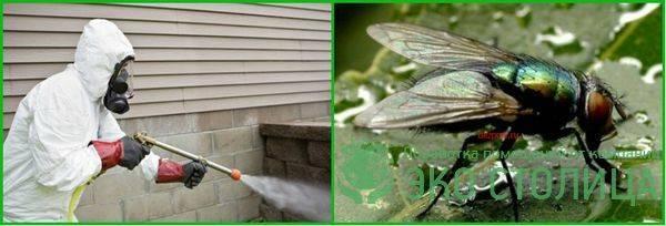 Как избавиться от мух? – в доме и квартире быстро