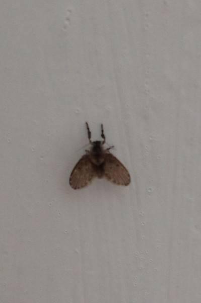 Откуда зимой в квартире мухи и мошки?