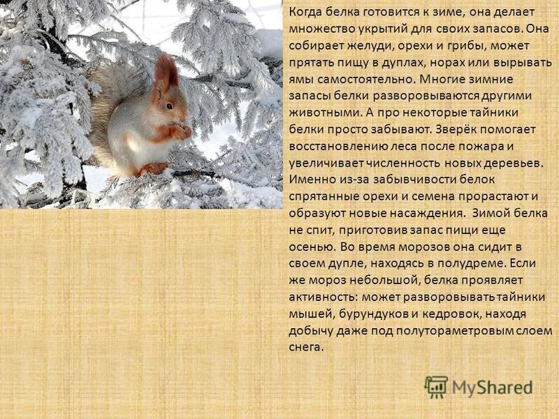 Ежи впадают в спячку или нет: все о зимовке животных в природе и домашних условиях