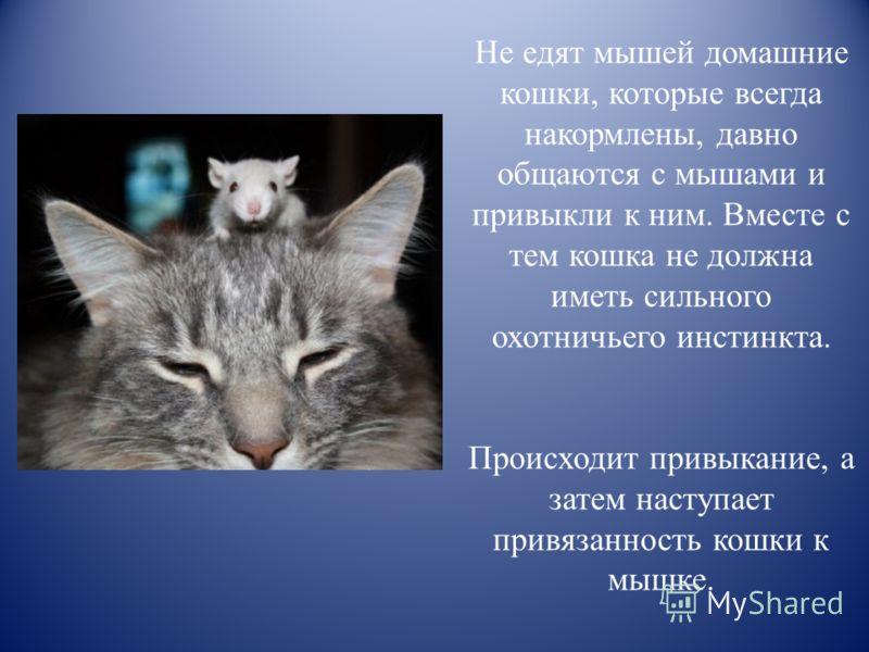 Зачем кошки несут убитых животных домой, почему приносят добычу хозяину, что делать с мышью?