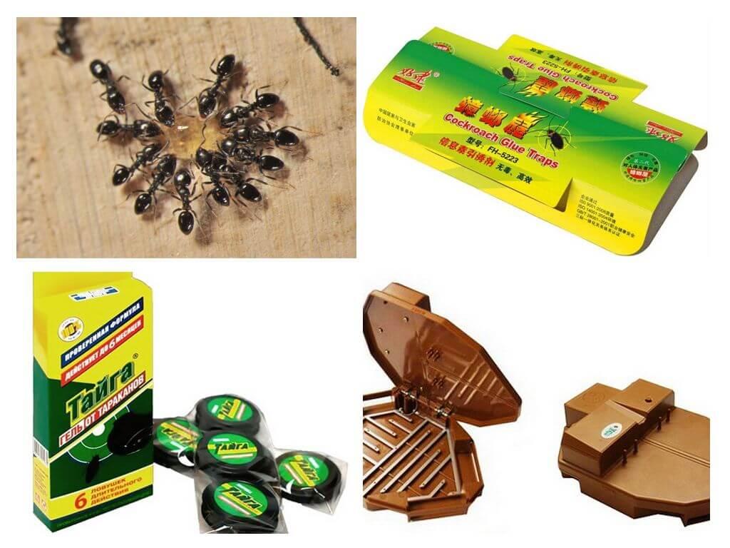 Как избавиться от муравьев в доме: способы, нюансы, рекомендации, цены на препараты