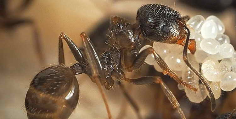 Приснились муравьи