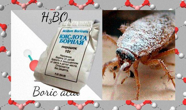 Борная кислота от тараканов рецепт с яйцом