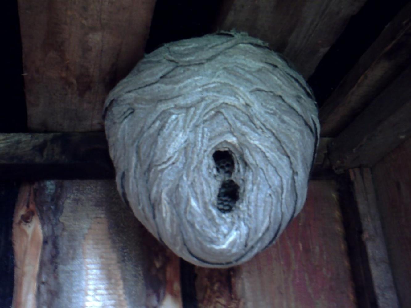 Как избавиться от ос в доме: на балконе, в стене, на чердаке, под крышей и в других местах
