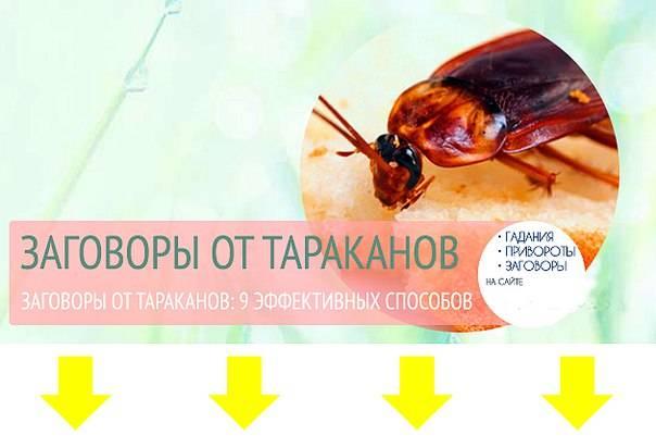 Заговоры от тараканов - 6 обрядов чтобы избавиться от них навсегда
