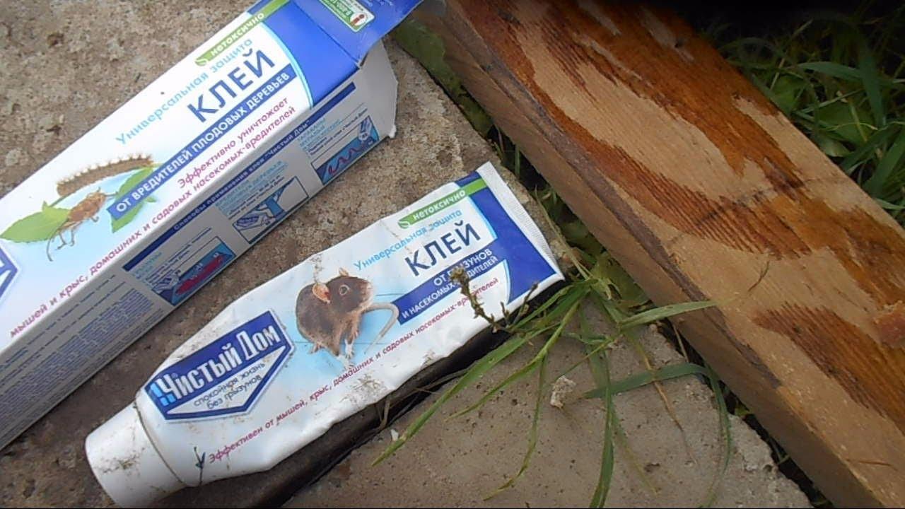 Как избавиться от мышей на даче? дельные советы