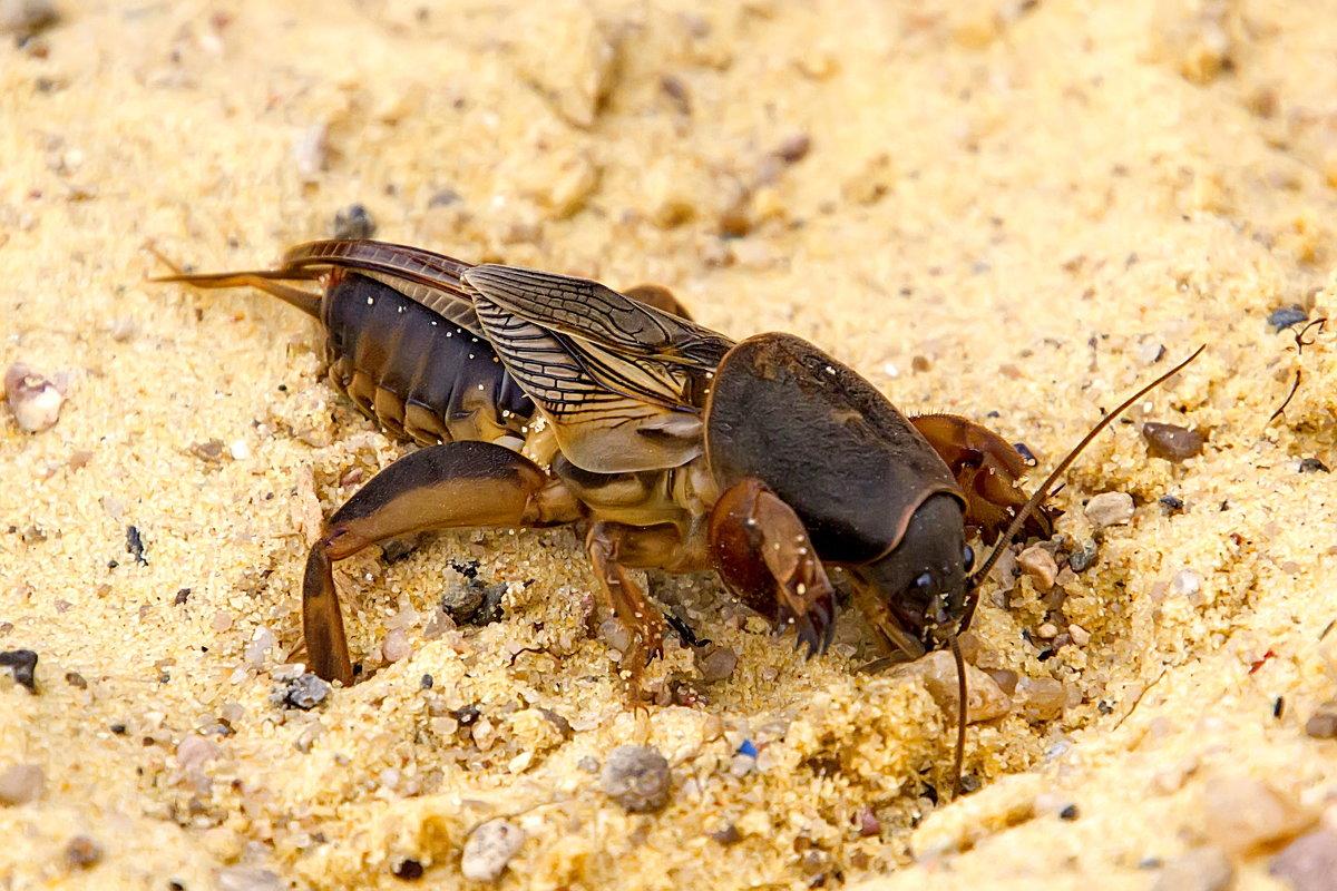 Земляные осы на даче: как избавиться