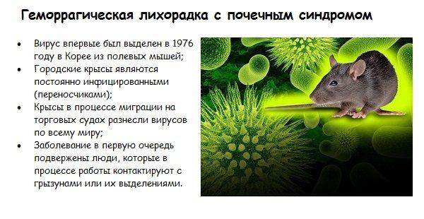 Какие болезни переносят крысы и мыши: чума и мышиный тиф и другое