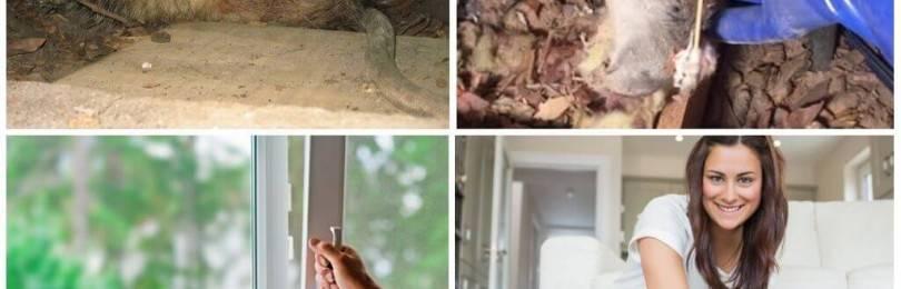 Сдохла мышь под полом как избавиться от запаха в домашних условиях — портал о стройке