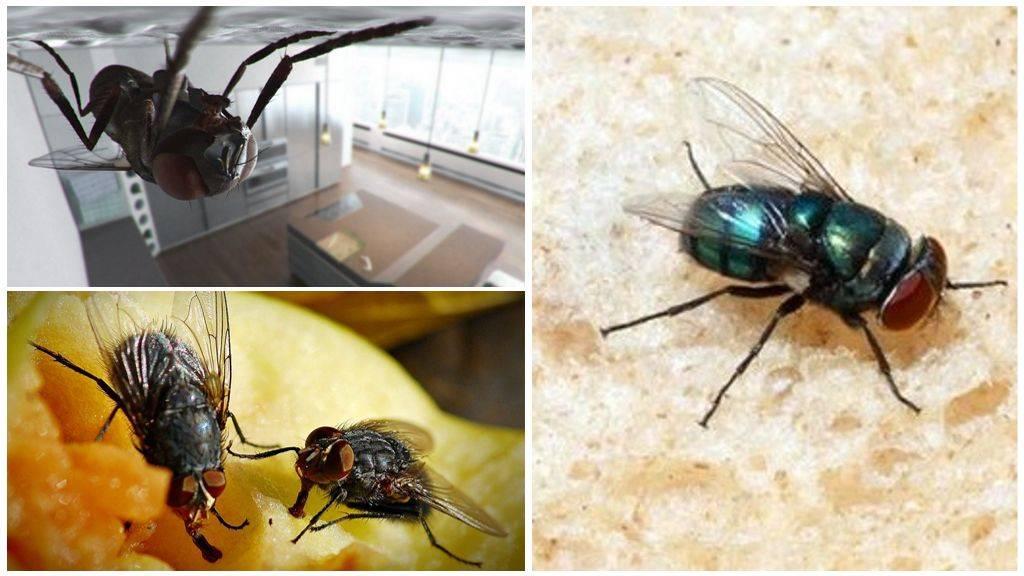 Почему мухи лапки моют. для чего мухи потирают лапками? среднее время прочтения: