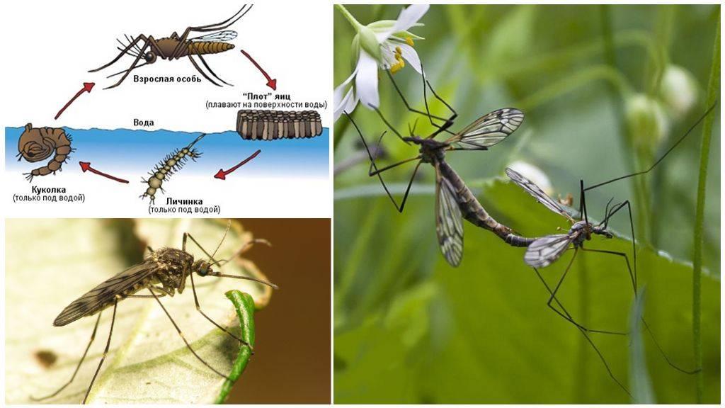 Почему пищат комары, как у них получается издавать писк, а не жужжание?