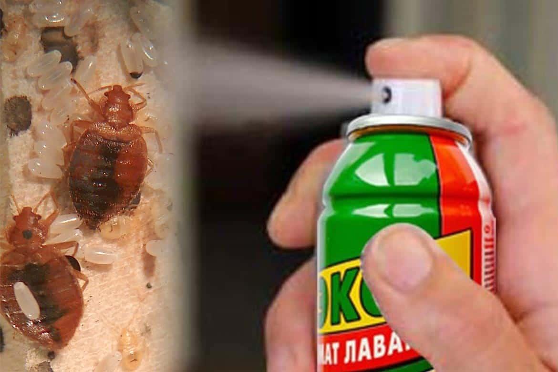 Аэрозоль или спрей от клопов: обзор эффективных средств от паразитов / как избавится от насекомых в квартире